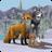 icon WildCraft 3.0
