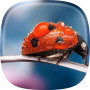 icon Ladybug Live Wallpaper